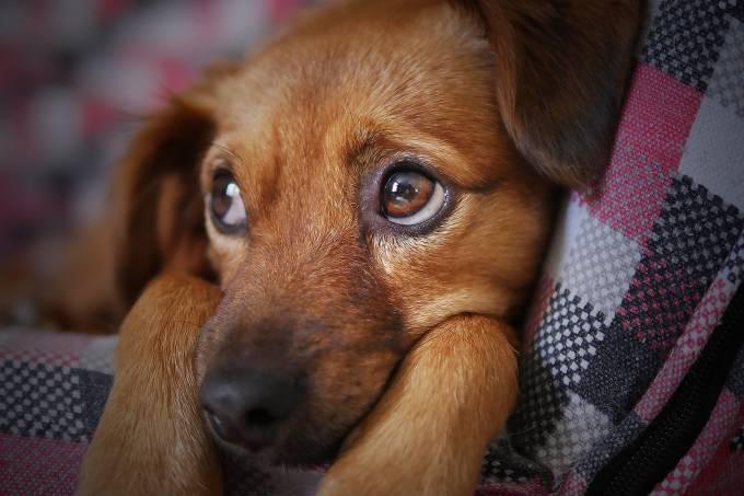 cachorro cão cadela
