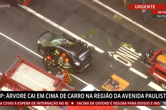 Árvore cai na Paulista