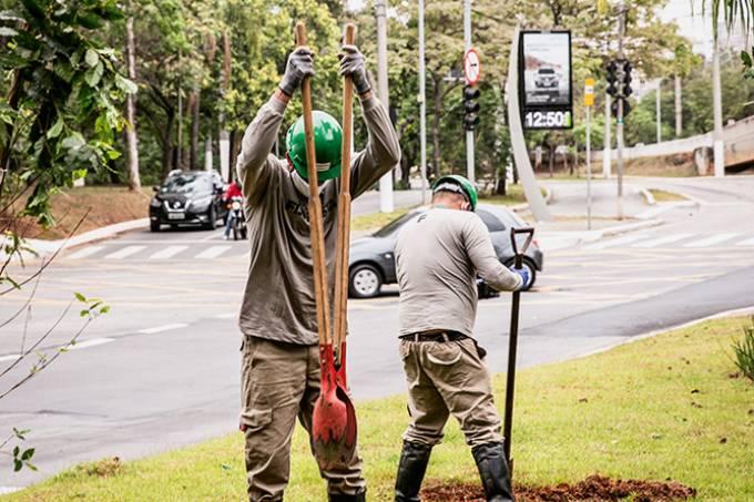 Postes e árvores Vila Olímpia – Grupo Colméia e Enel (Daniel Valenti Fotografia-Divulgação)