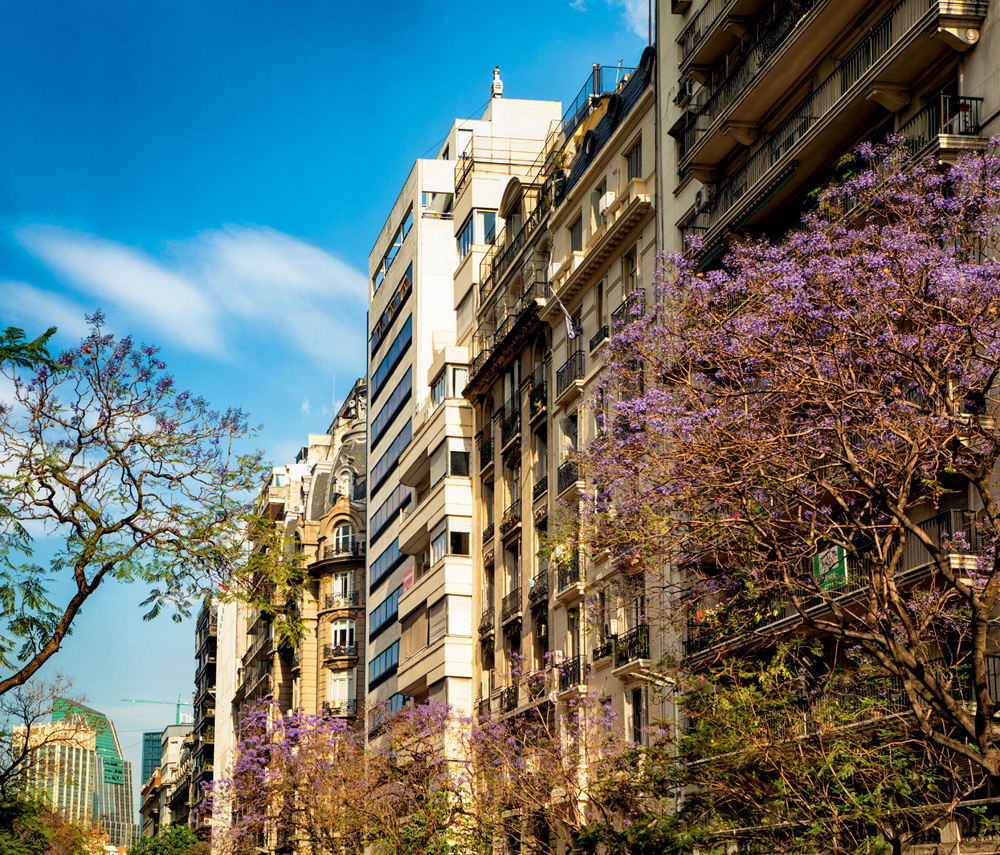 Buenos Aires Recoleta upper floors of several apartment buildings with Jacaranda trees in bloom.