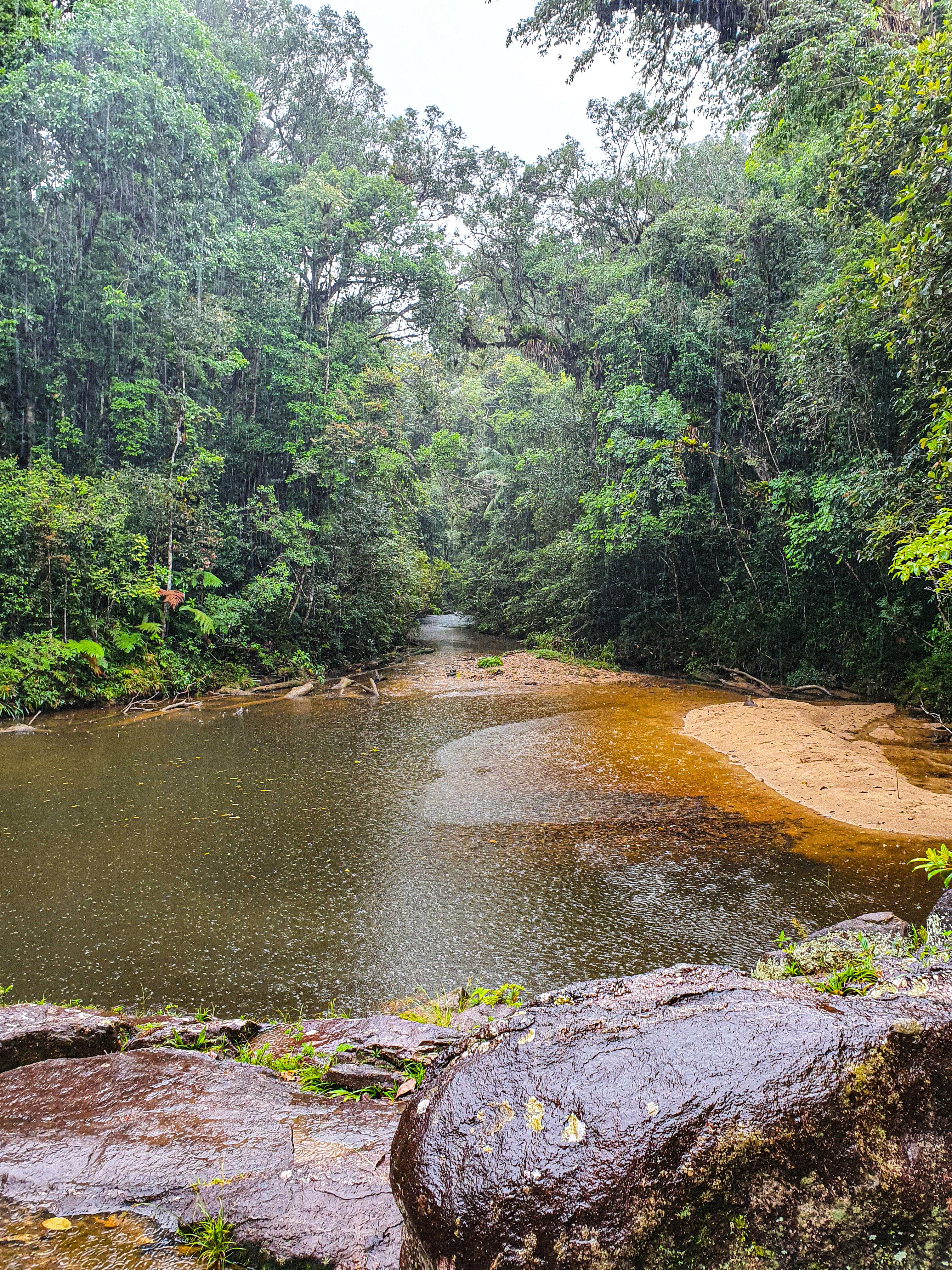 Imagem mostra região de mata com Rio Capivari ao centro