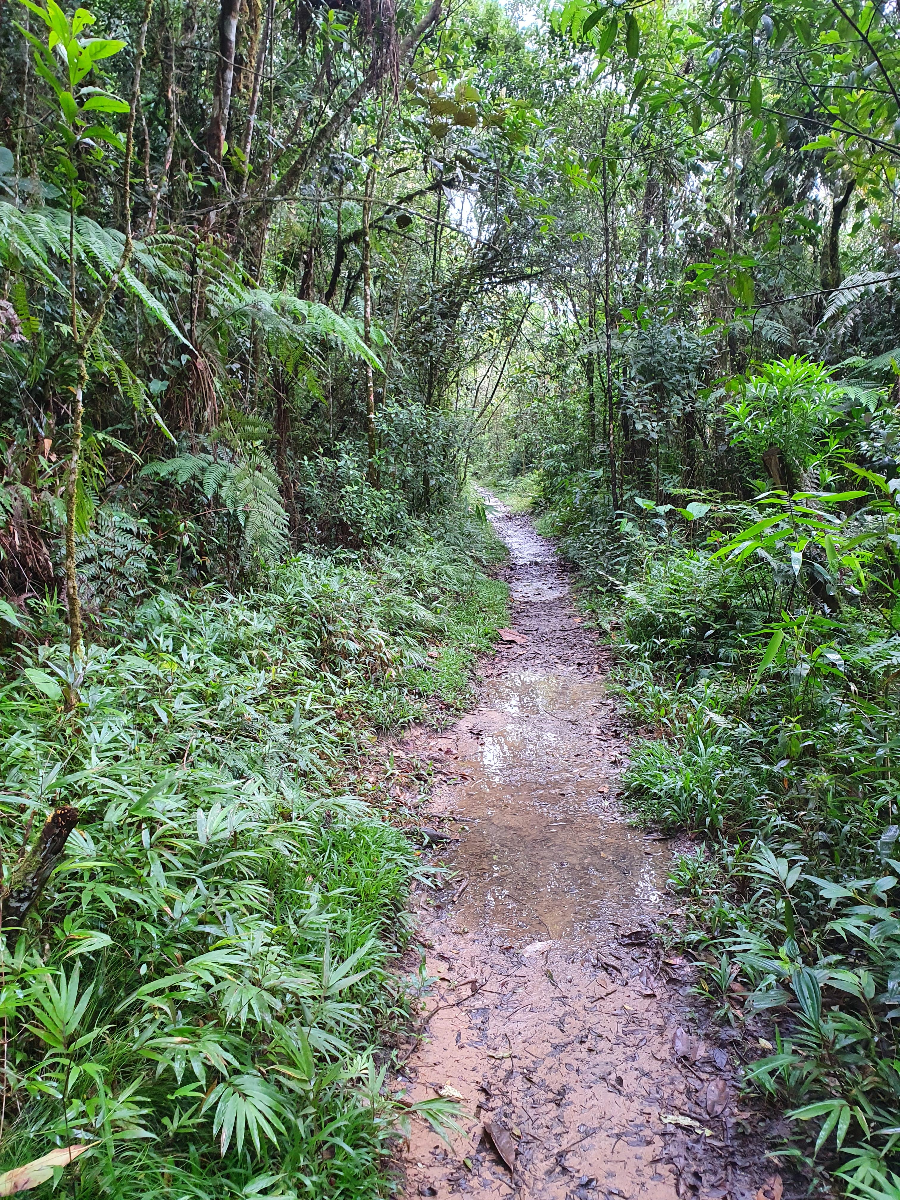 Imagem mostra parte da trilha de 1,1 km que leva até a Cachoeira, rodeada de mata