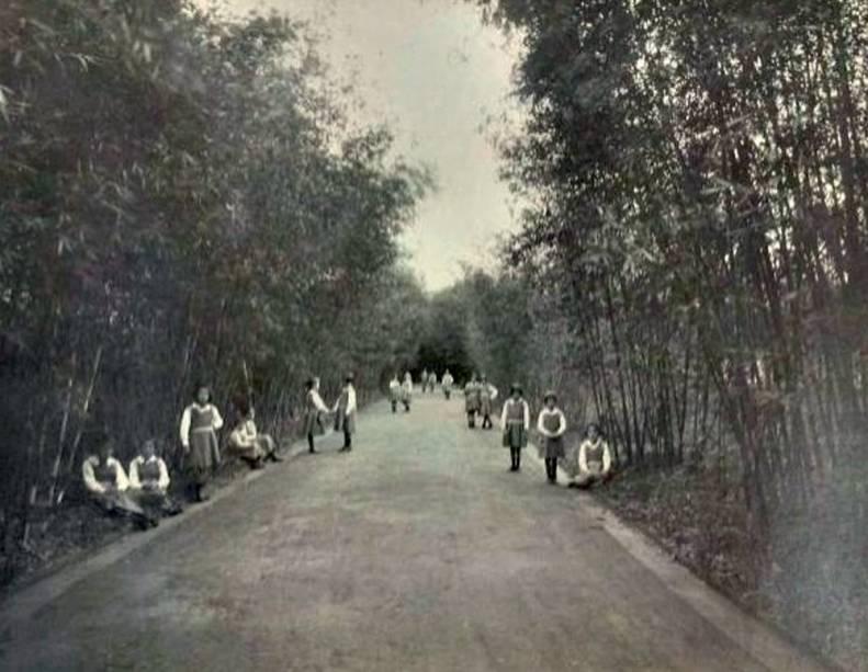 Bosque no início do século XIX