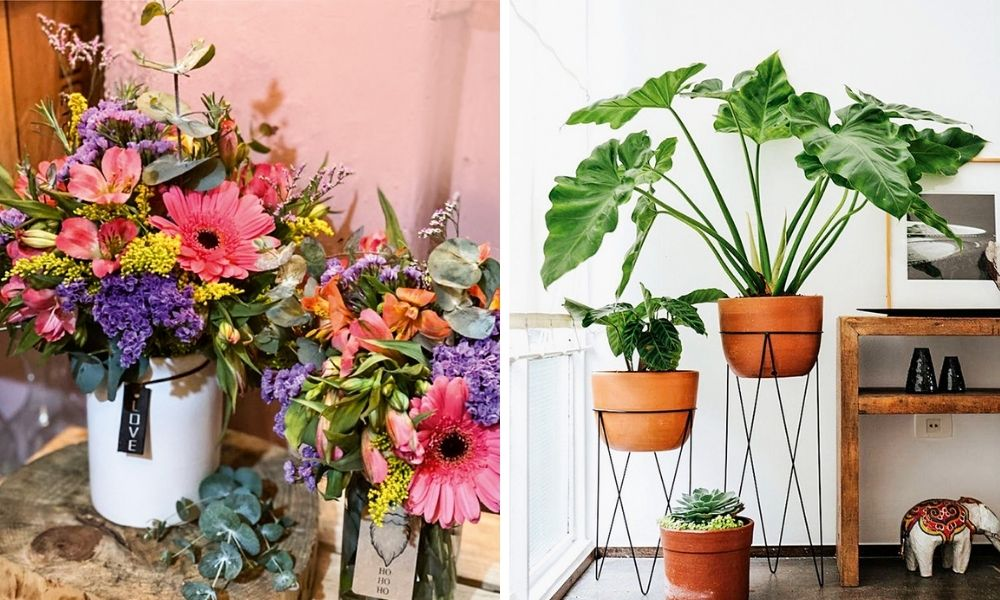 Flores de Maico, à esquerda mais coloridas, à direita mais simples
