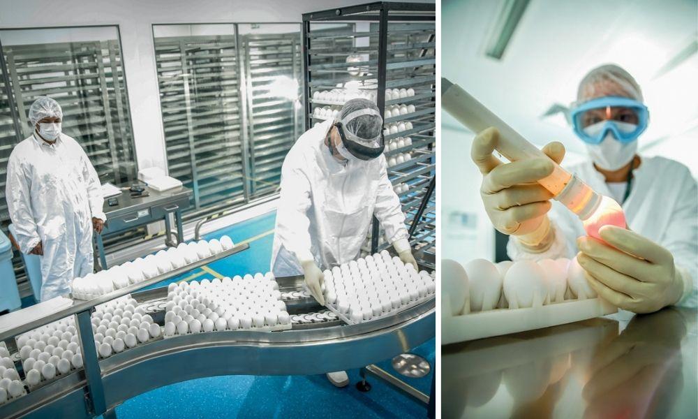 Profissional, inteiramente coberto por equipamentos de proteção branco, carregando uma forma dos ovos para a vacina. À direita, na montagem, um funcionário fazendo o monitoramento de um desses ovos