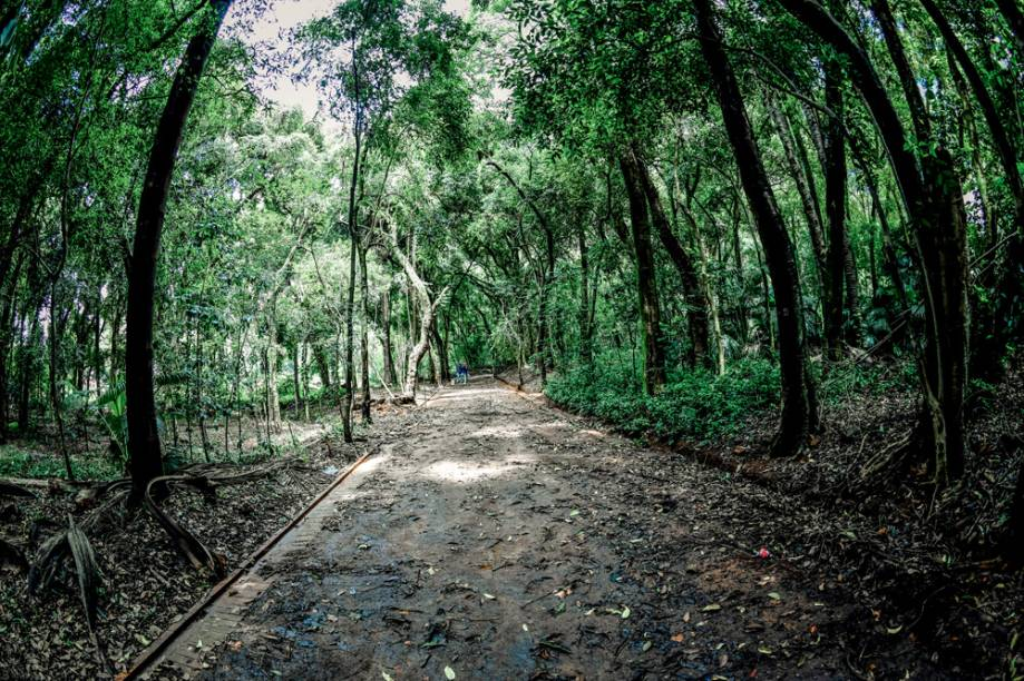 Bosque no Parque Augusta: tombado