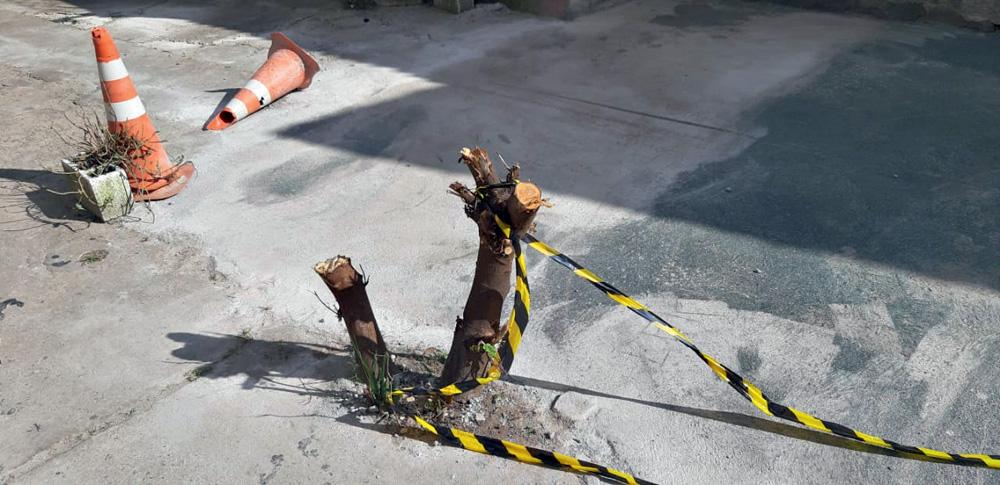 imagem de toco de árvore em meio ao asfalto