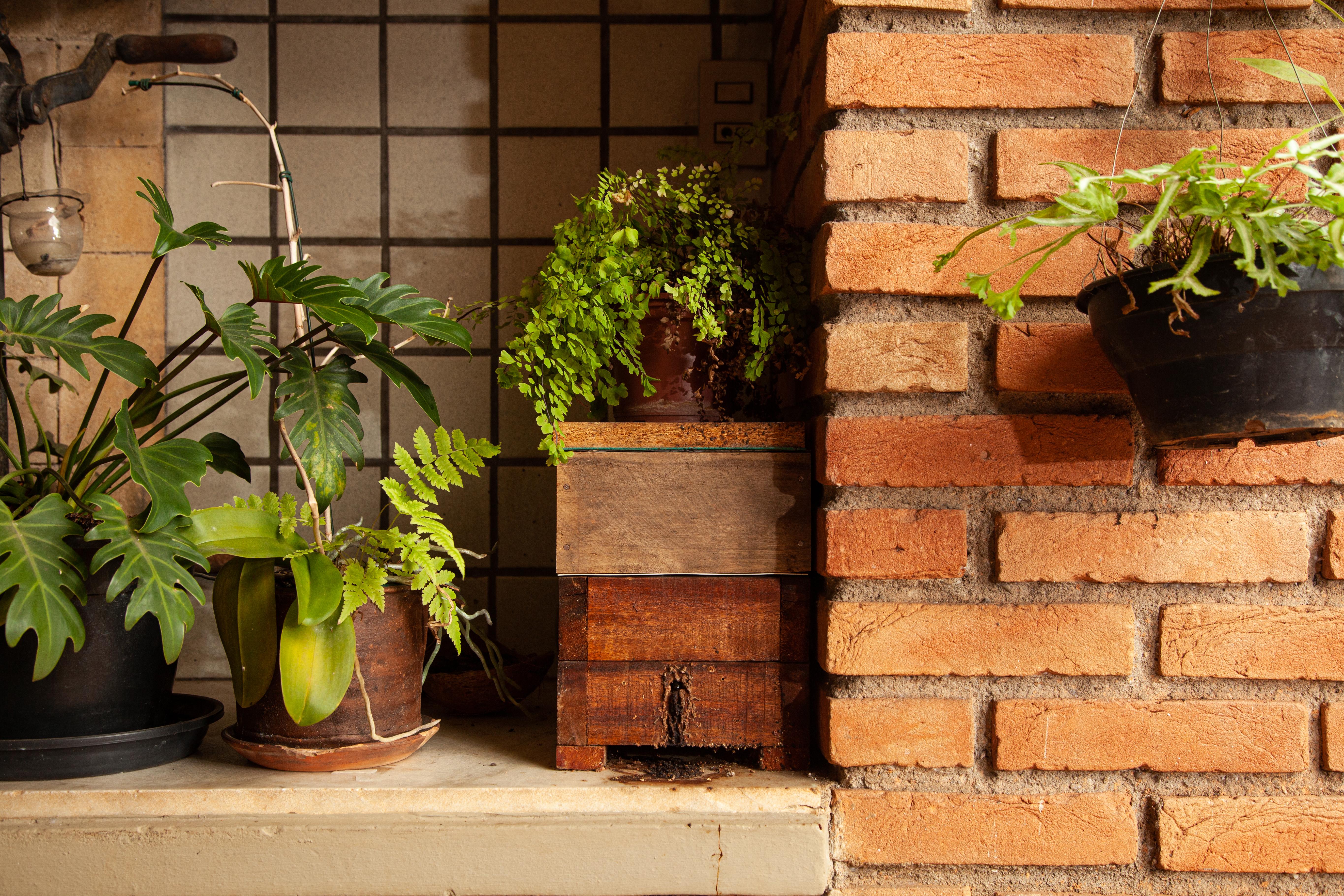 Caixa de abelhas ao lado de plantas e de uma parede com tijolinhos