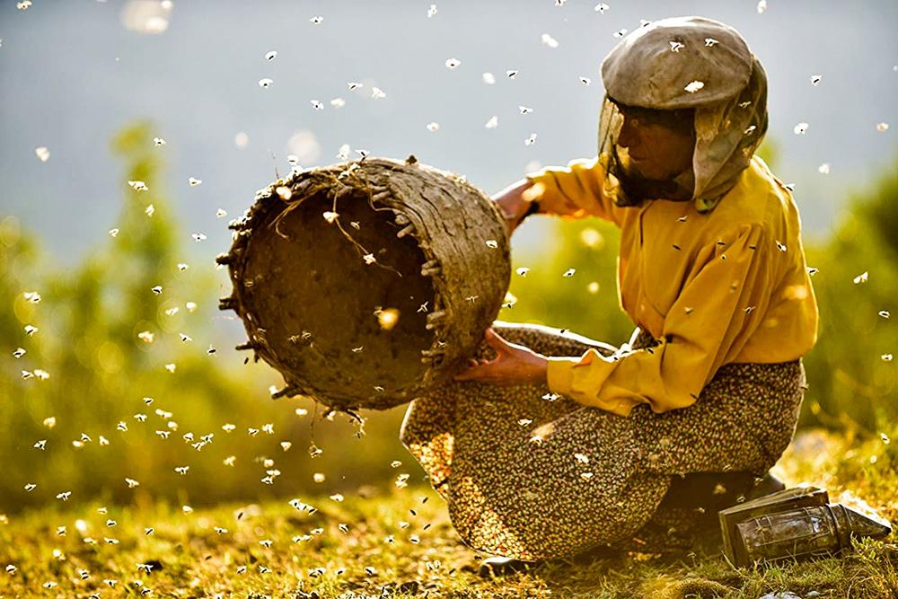 Mulher com blusa amarela segura uma cesta de palha com centenas de abelhas voando a sua volta