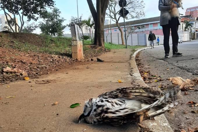 Complexo Rapadura (REPRODUÇÃO)