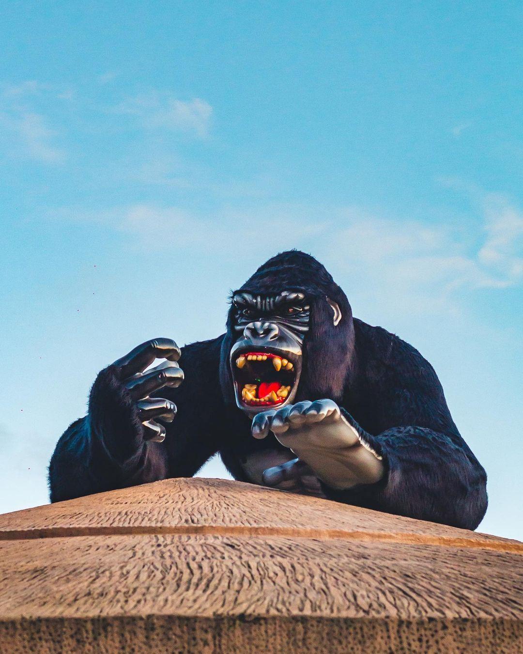 A imagem mostra a estátua de Gorila presente no Beto Carrero World