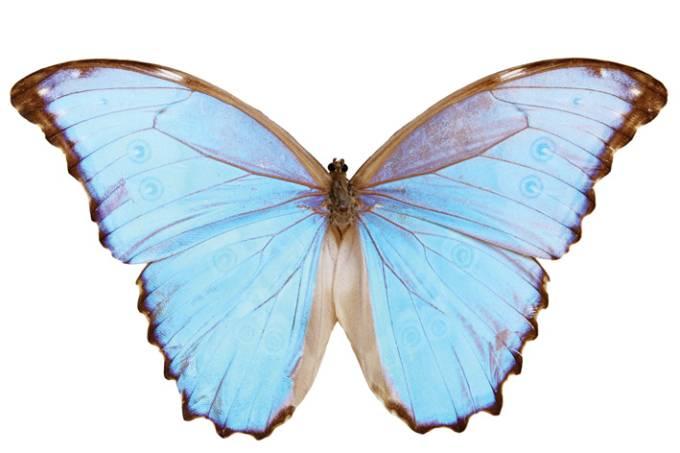 a-tal-felicidade-Shel-Zeijden-mente-coracao-se-alinham-borboleta-destaque.jpeg.jpg