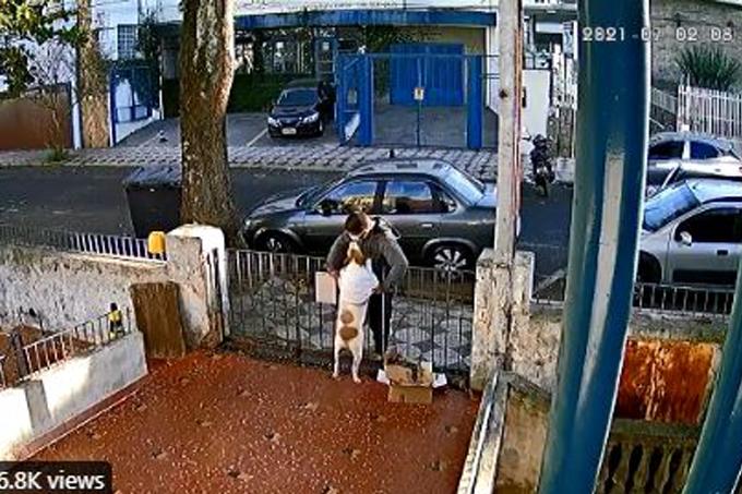 Ladrão cachorro Sorocaba