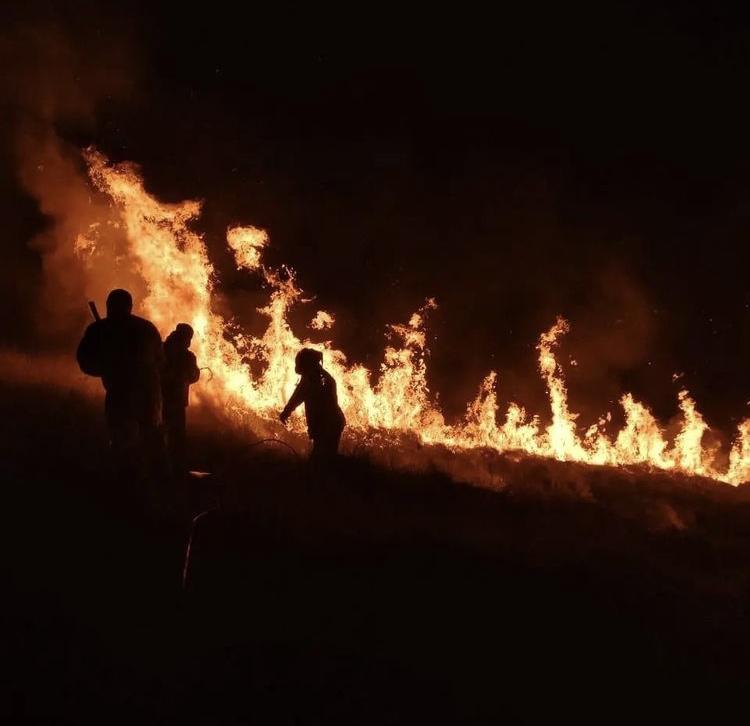 Imagem mostra chamas em área de mata e três pessoas tentando combater o fogo com água