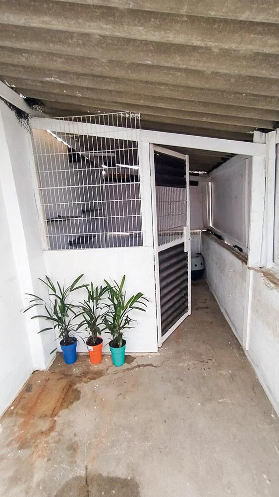 foto da entrada do gatil da empresa Loremi, com uma porta aberta à direita e três plantas em pequenos vasos à frente de uma parede