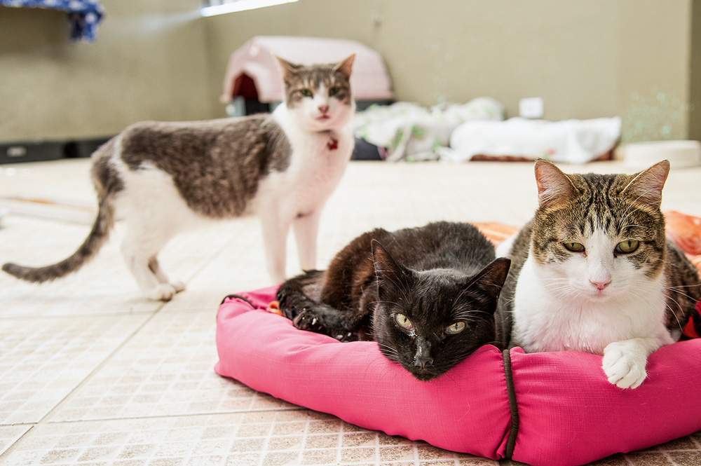 gatos com cara de entediados olhando para a câmera. um deles está de pé e os outros dois estão deitados em uma cama rosa. dois são rajados e um dos sentados, preto