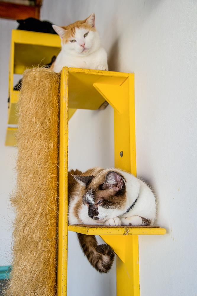 dois gatos repousando em estrutura própria para felinos amarela presa à parede. cada um está em um nível. um deles é multicolor e o outro é laranja e branco