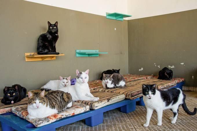 gatos-resgatados-abrigo-ong-confraria-dos-miados-latidos-saga-gatos-sabesp-ongs-destaque.jpg.jpg