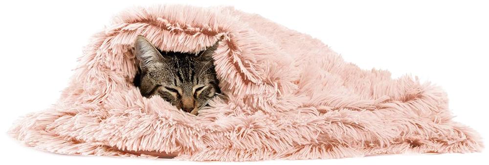 gato dormindo enrolado em cobertor feupudo