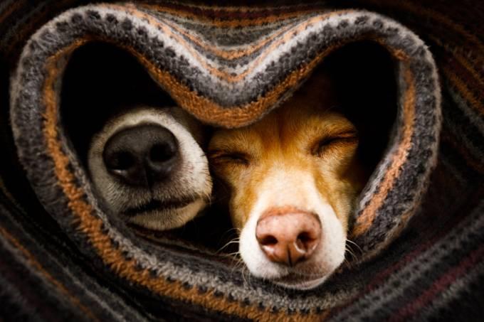 pets-no-frio-cachorros-gatos-doencas-destaque-cachorros-enrolados-cobertor.jpg