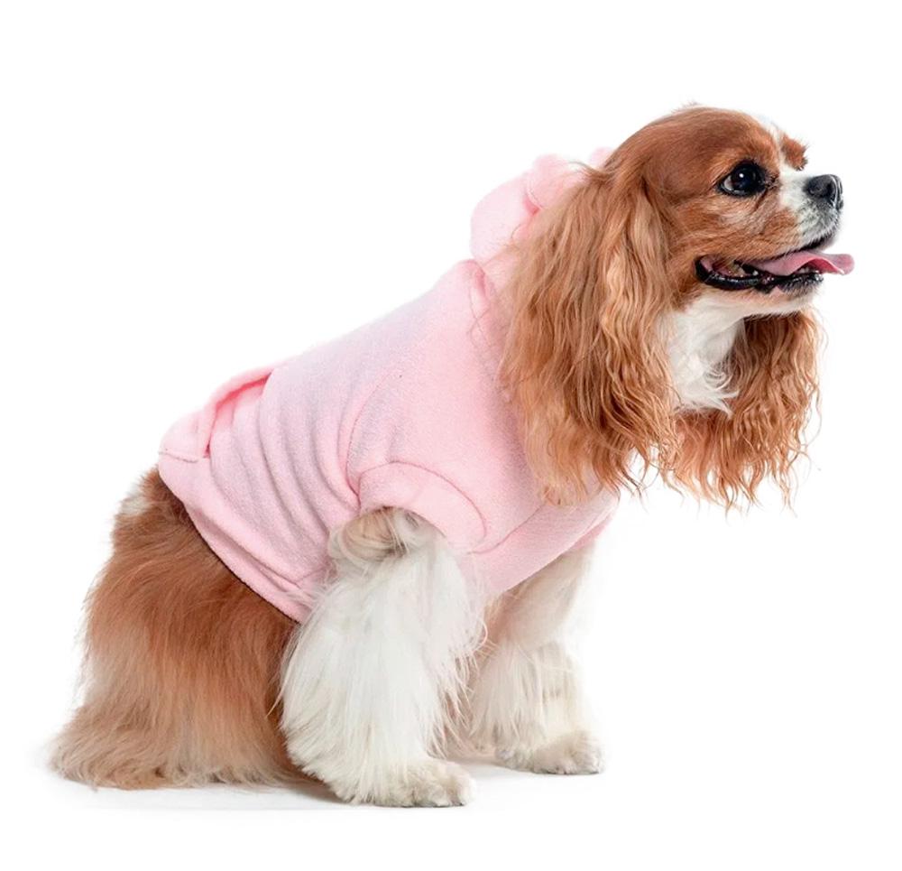 cachorro marrom de raça com língua de fora e roupa rosa