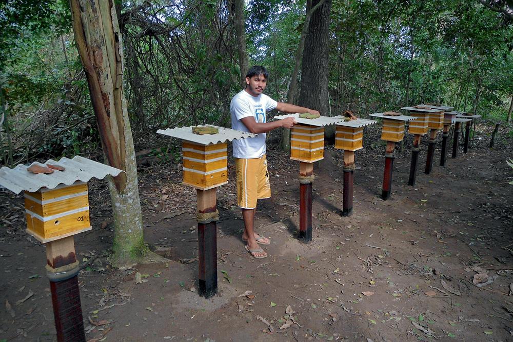 Junto das colmeias alinhadas em casinhas de madeira, Tiago posa em ambiente arborizado