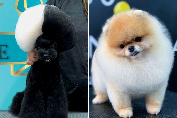 groomers-cachorros-corte-cruella-nuvem-destaque.jpg