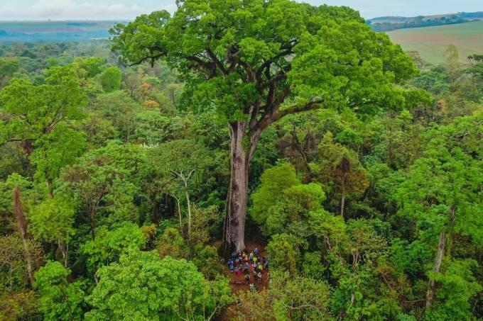 Parque Estadual Vassununga