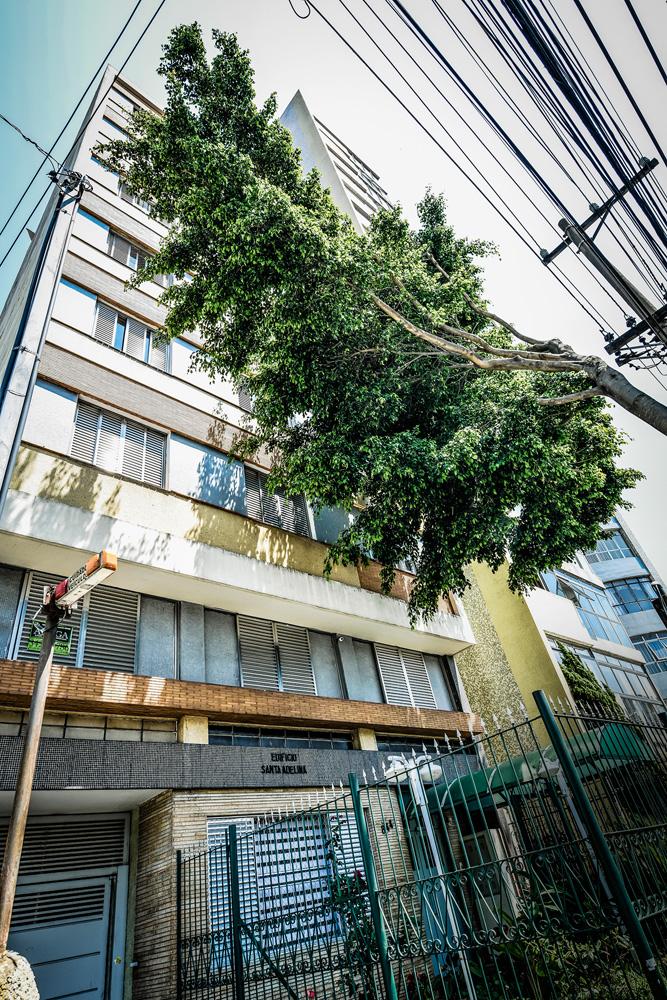 A imagem mostra galhos de uma árvore bem em frente a janelas de um prédio na Mooca.