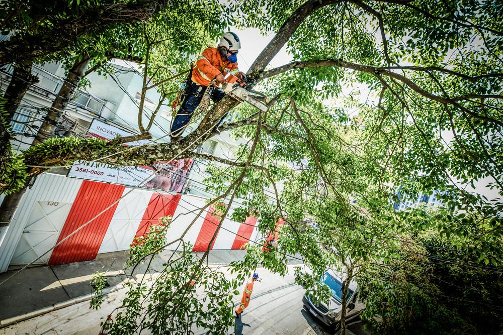 A imagem mostra um agente da subprefeitura serrando um grande galho de uma árvore já em cima dela.